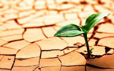 Empresas resilientes para salir fortalecidos del COVID-19